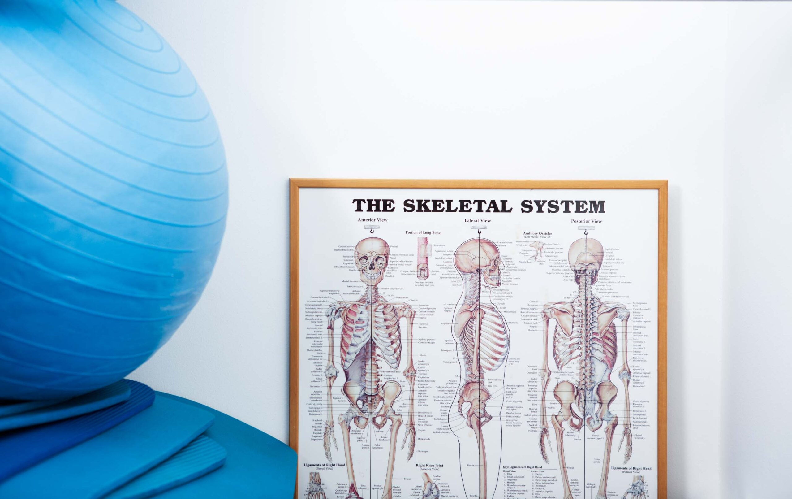 Human Skeleton Diagram and Exercise Ball